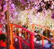 常夏シンガポールでお花見?!ガーデンズバイザベイの桜が意外といい感じ